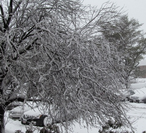 wet_snow_tree
