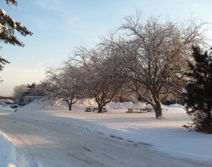 winter_fruit_trees